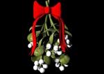39e9c-harvard-mistletoe